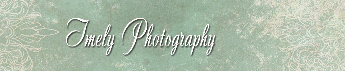 Sarasota Wedding Photographer logo